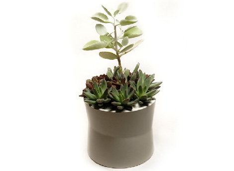 Succulentlashop
