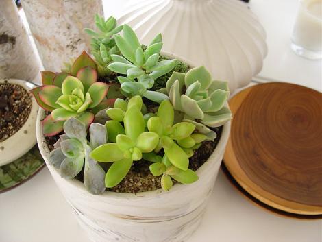 Succulentgarden
