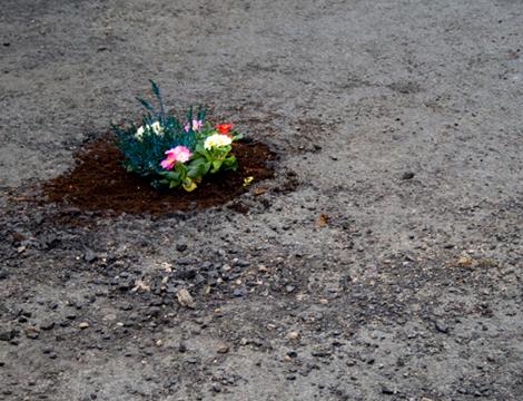 Pete-dungey-pothole-garden1