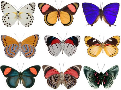 The-evolution-store-butterflies
