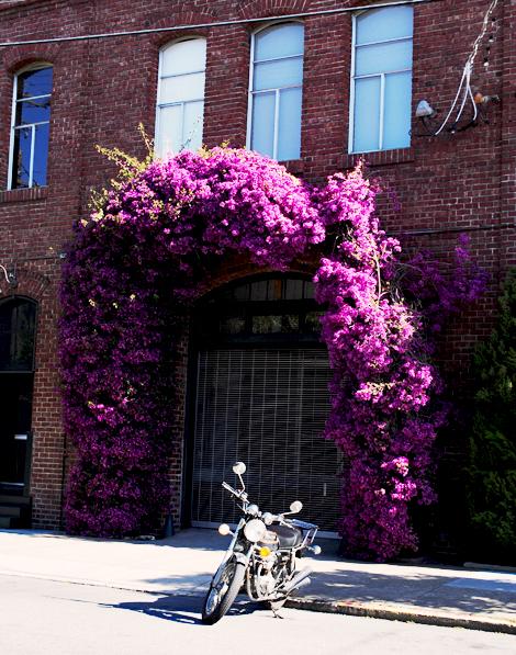 Sf-floral-doorway1