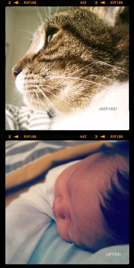 Oh-joy-cat-baby2