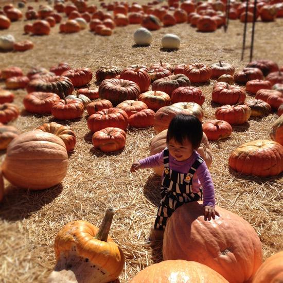 Oh-joy-ruby-pumpkins