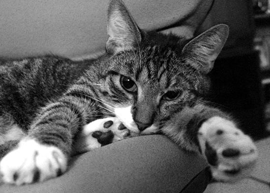 Oh-joy-bruce-cat
