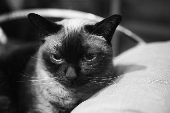 Oh-joy-lucy-cat