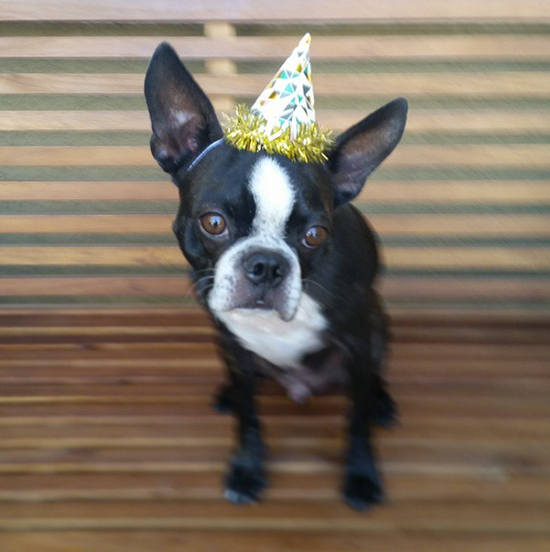 Party Pup! (via @oohlaloveevents)