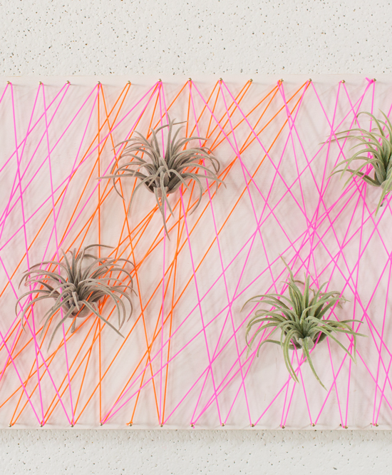 Living Wall Art with Air Plants