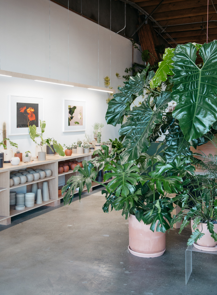 Sanso Plant & Design Shop in Los Angeles / Oh Joy!