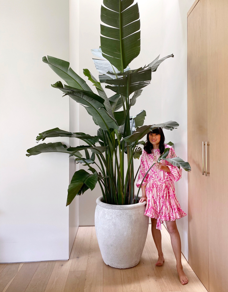 How to Become a Plant Lady / Oh Joy!